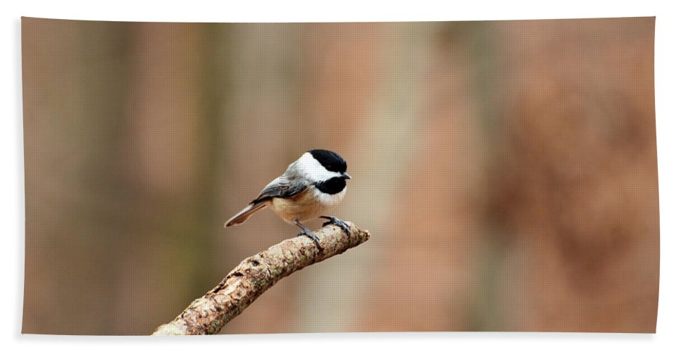 Bird Beach Towel featuring the photograph Out On A Limb by Lori Tambakis