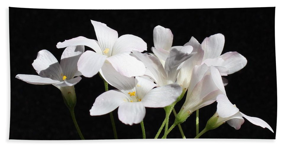 Floral Beach Towel featuring the photograph Oxalis Flowers 2 by Kume Bryant