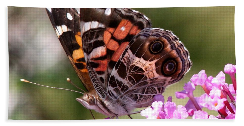 Butterfly Beach Towel featuring the photograph Painted Lady by Travis Truelove