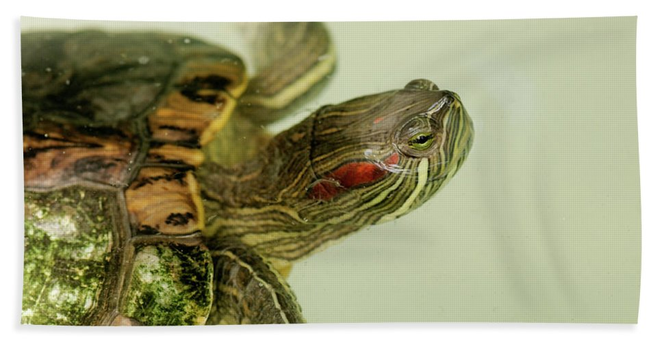 Abc Islands Beach Towel featuring the photograph Painted Turtle by Roderick Bley