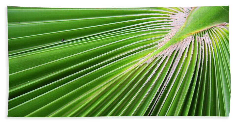 Roena King Beach Towel featuring the photograph Palm Tree Frond by Roena King