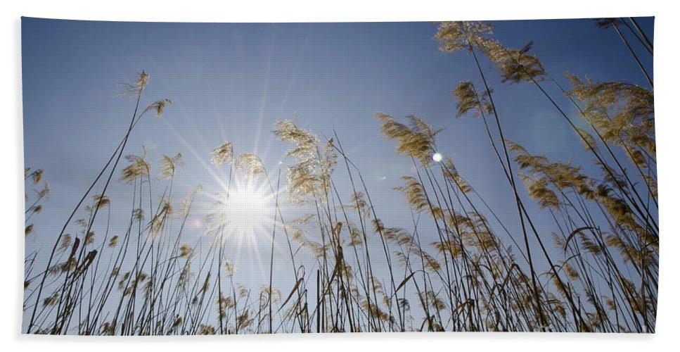 Pampas Grass Beach Towel featuring the photograph Pampas Grass by Mats Silvan