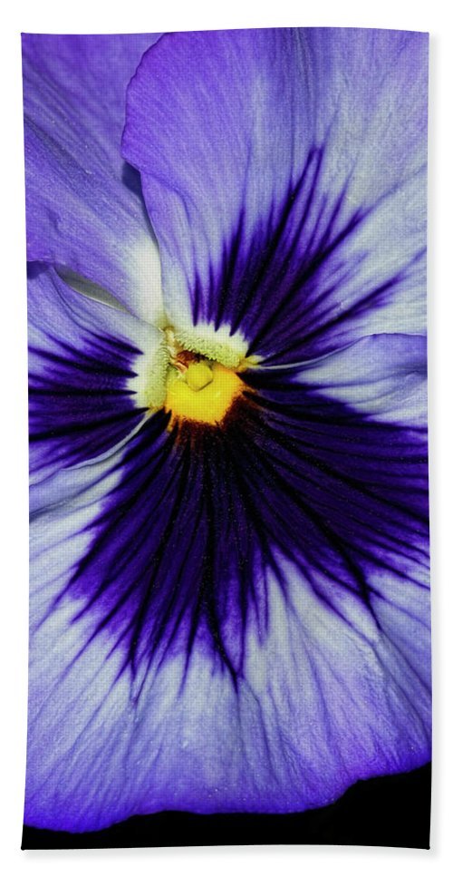 Pansy Beach Towel featuring the photograph Pansy Closeup by Dave Mills