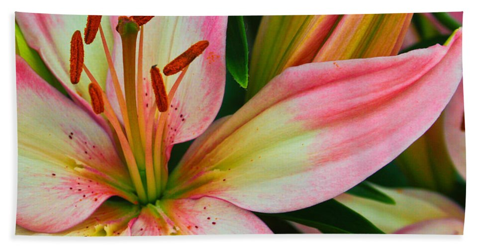 Floral Beach Towel featuring the photograph Pastel Pretty by Lynne Jenkins