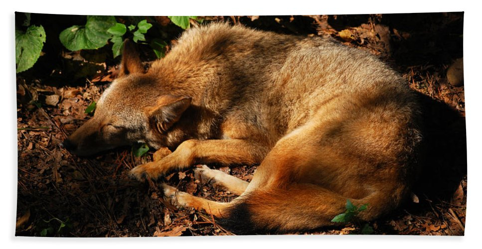 Red Fox Beach Towel featuring the photograph Peaceful Slumber by Lori Tambakis