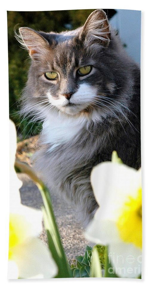 Cat Beach Towel featuring the photograph Peanut The Cat And Jonquils by Mike Nellums
