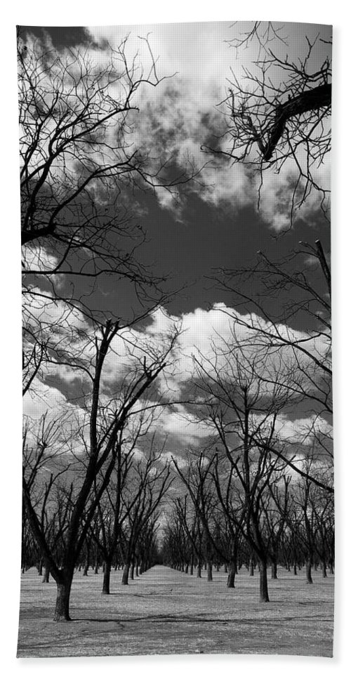 New Mexico Beach Towel featuring the photograph Pecan Trees by Sean Wray