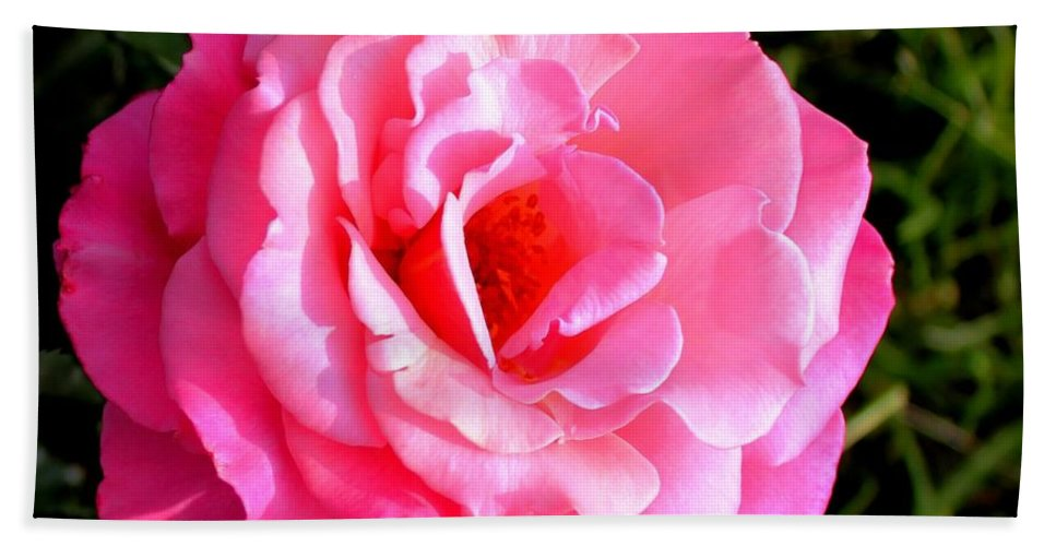 Peekaboo Rose Beach Towel featuring the photograph Peek-a-boo Rose Square by Barbara Griffin