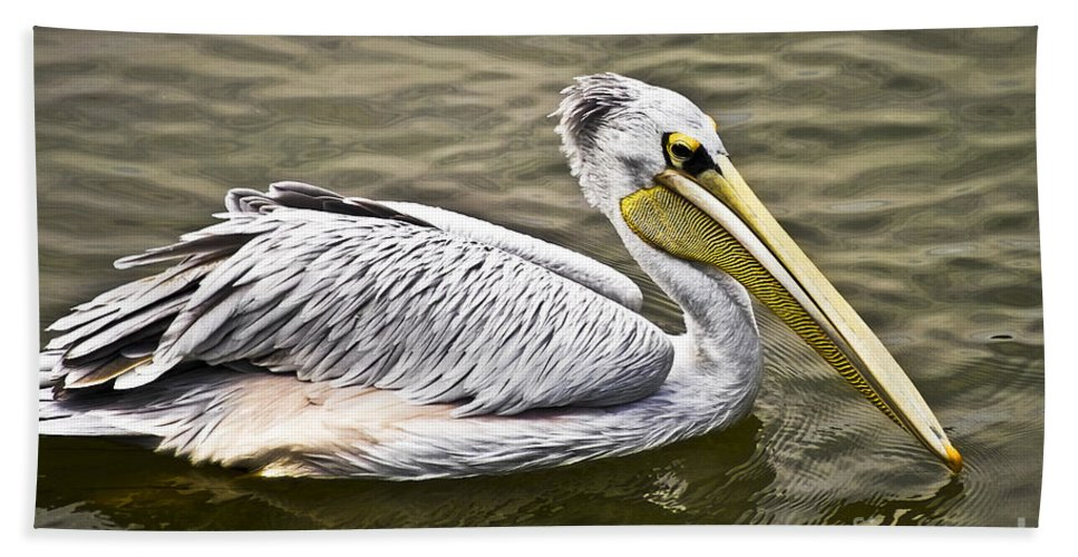 Nature Beach Towel featuring the photograph Pelican by Heiko Koehrer-Wagner