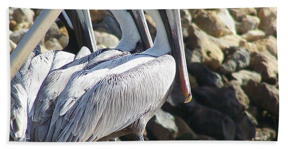 Keaton Beach Beach Towel featuring the photograph Pelicans Of Keaton Beach Canal by Marilyn Holkham