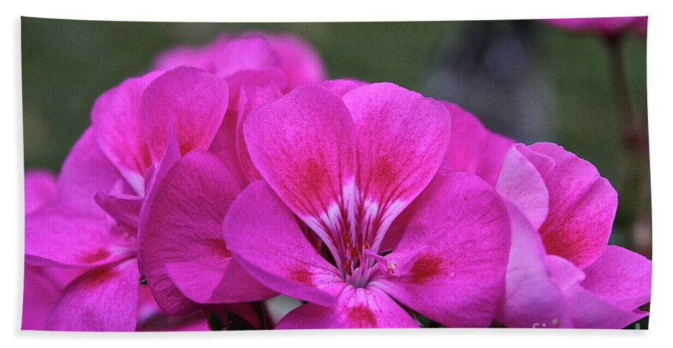 Beach Towel featuring the photograph Pepto Pink by Susan Herber