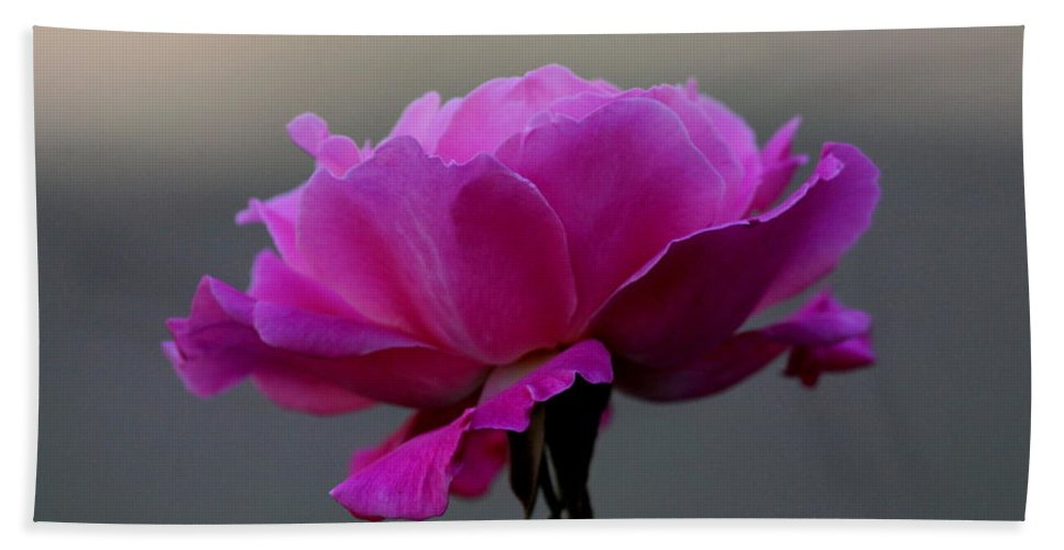 Prints Beach Towel featuring the photograph Petals And More by Travis Truelove
