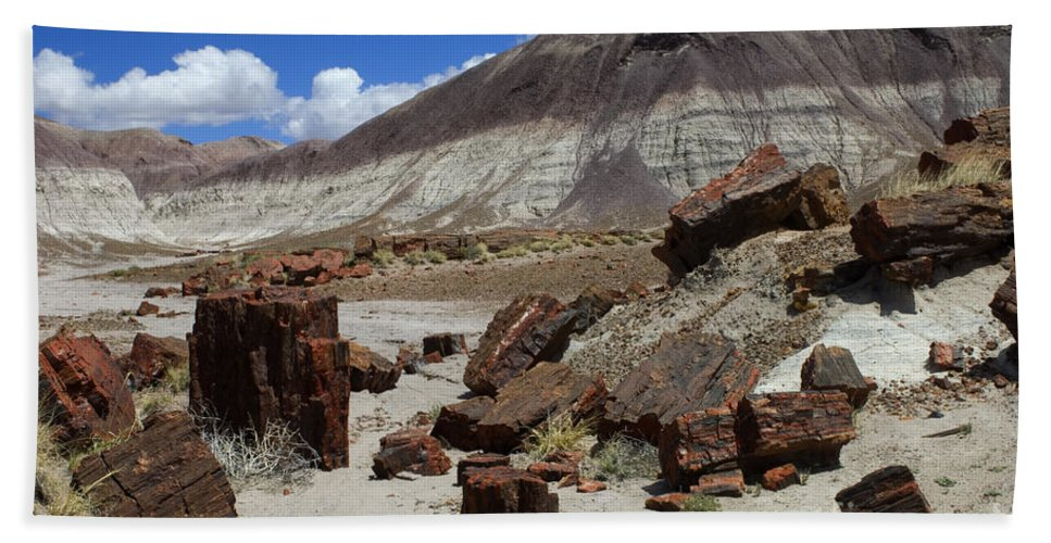 Petrified Forest Beach Towel featuring the photograph Petrified Forest 2 by Bob Christopher