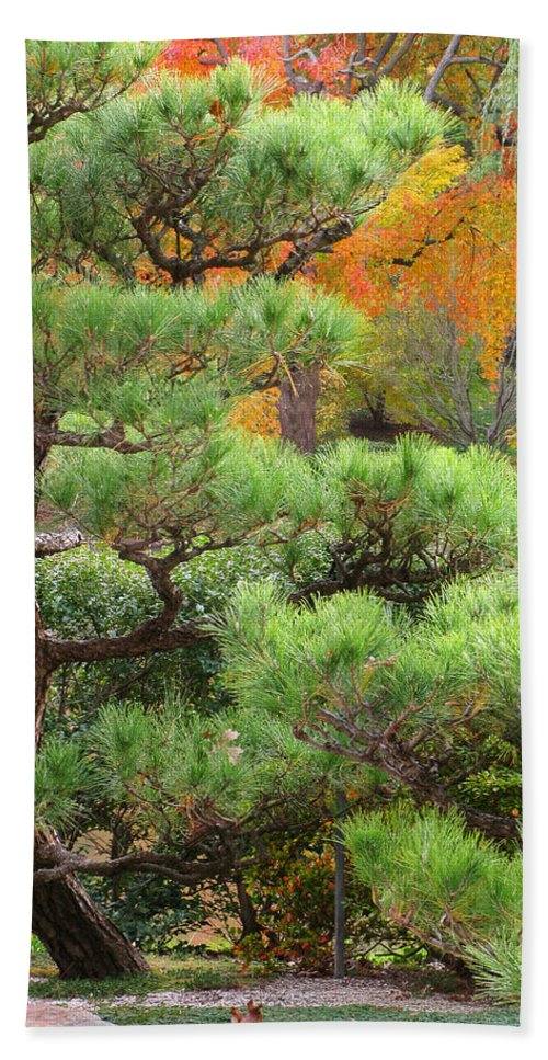 Pine Beach Towel featuring the photograph Pine And Autumn Colors In A Japanese Garden II by Greg Matchick