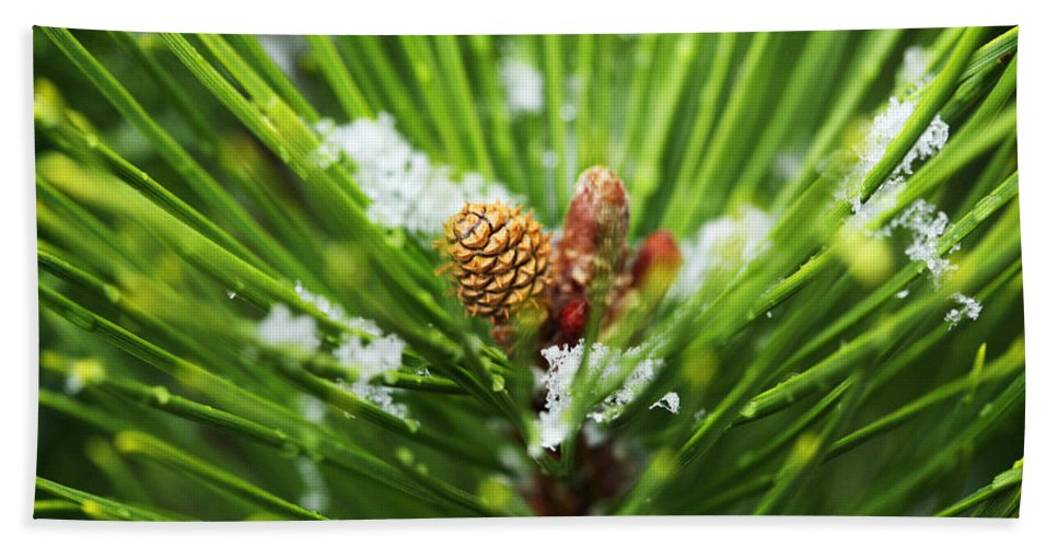 Pine Beach Towel featuring the photograph Pine Cone Cloeup by Marilyn Hunt