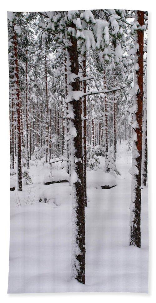 Lehtokukka Beach Towel featuring the photograph Pine Forest In January by Jouko Lehto
