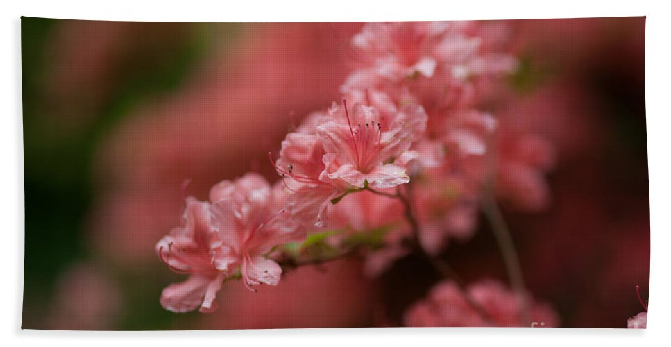 Rhodies Beach Towel featuring the photograph Pink Blossoms by Mike Reid