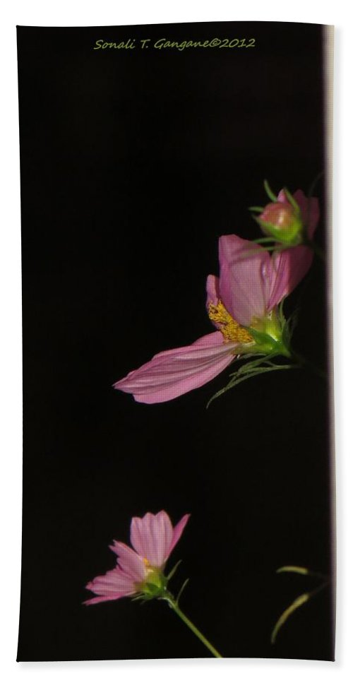 Floral Cosmos In Dark Beach Towel featuring the photograph Pink Cosmic Stars by Sonali Gangane