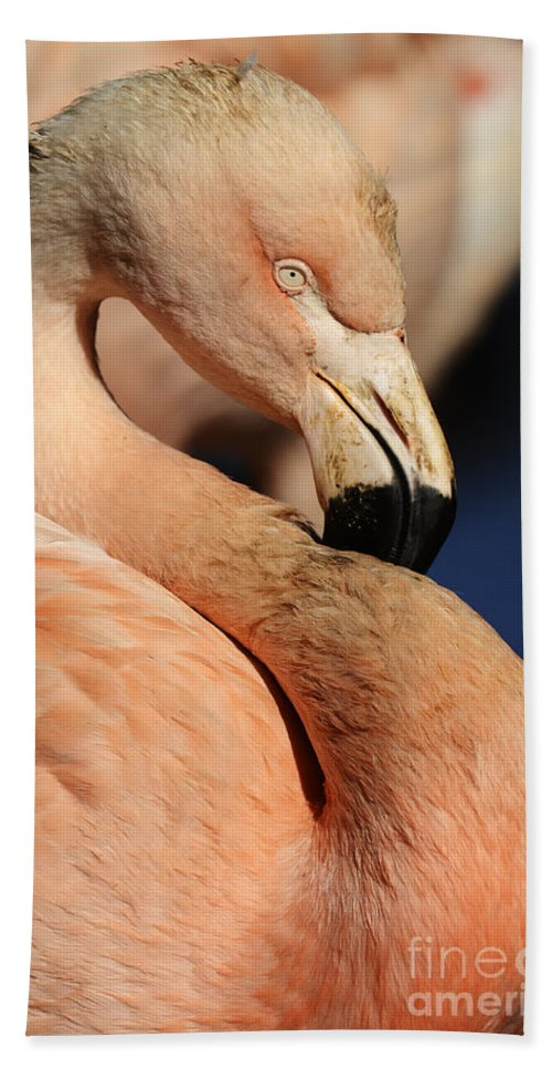Pink Flamingo Beach Towel featuring the photograph Pink Flamingo 8 by Bob Christopher
