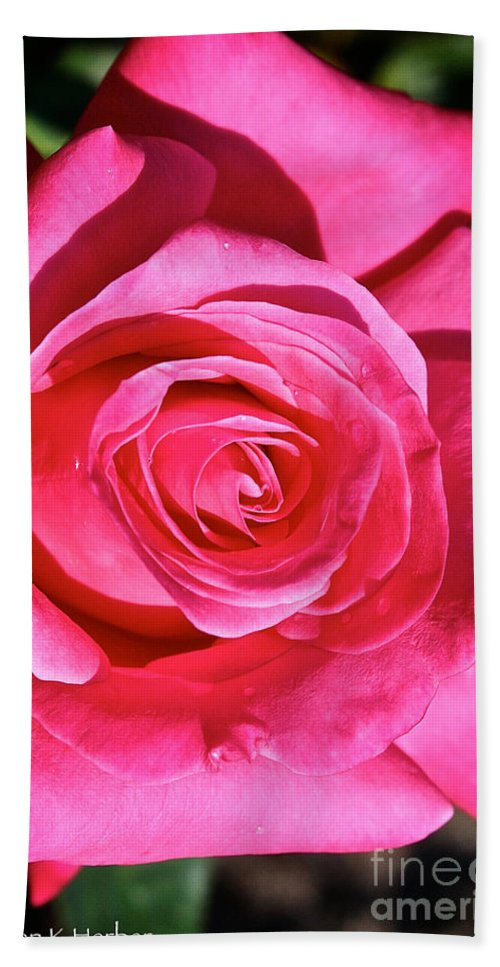 Outdoors Beach Towel featuring the photograph Pink Sunrise Rose by Susan Herber