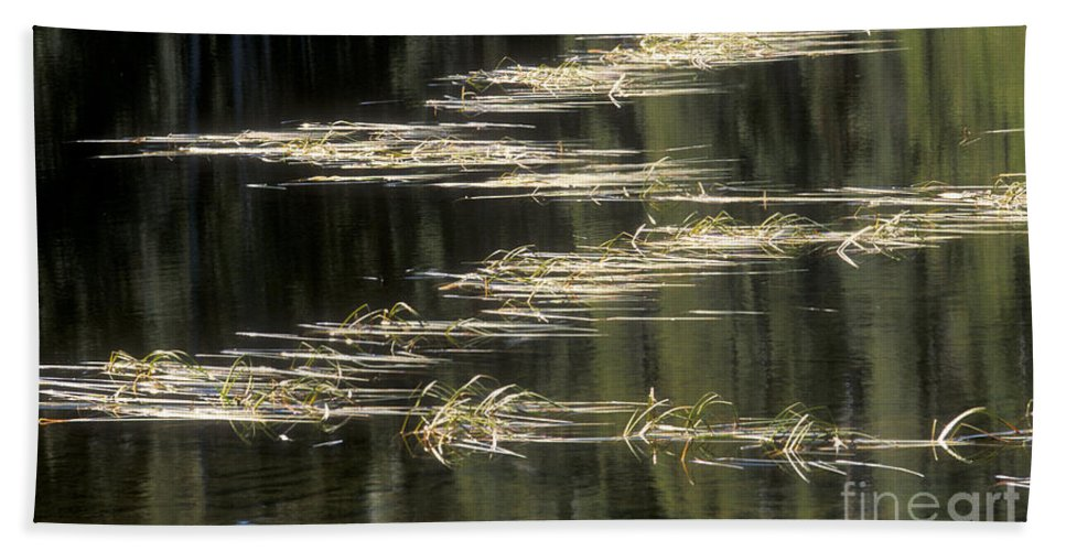 Bronstein Beach Towel featuring the photograph Pond And Grass Abstract by Sandra Bronstein
