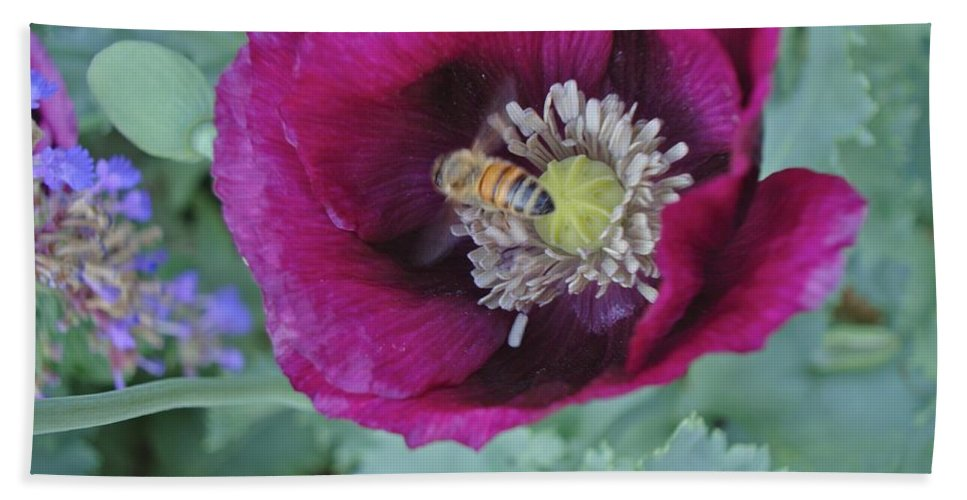 Bee Beach Towel featuring the photograph Poppy by Joseph Yarbrough