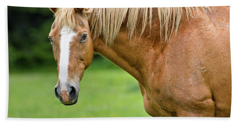 Horse Beach Towel featuring the photograph Portrait Of A Horse by Greg Nyquist