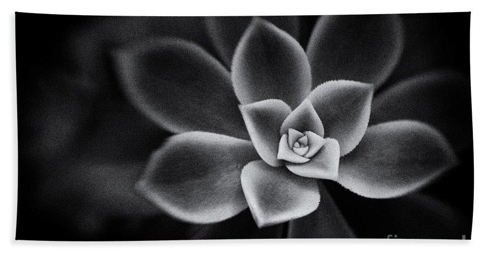 Botanical Beach Towel featuring the photograph Portrait Of A Succulent by Venetta Archer