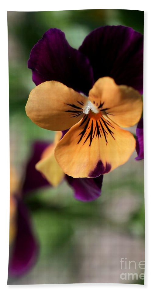 Pansy Beach Towel featuring the photograph Prettiest Pansy by Sabrina L Ryan