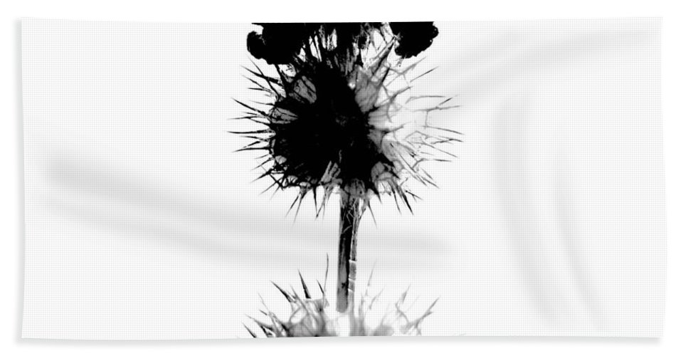 Window Framed Prints Framed Prints Beach Towel featuring the photograph Prickles Of Us by The Artist Project