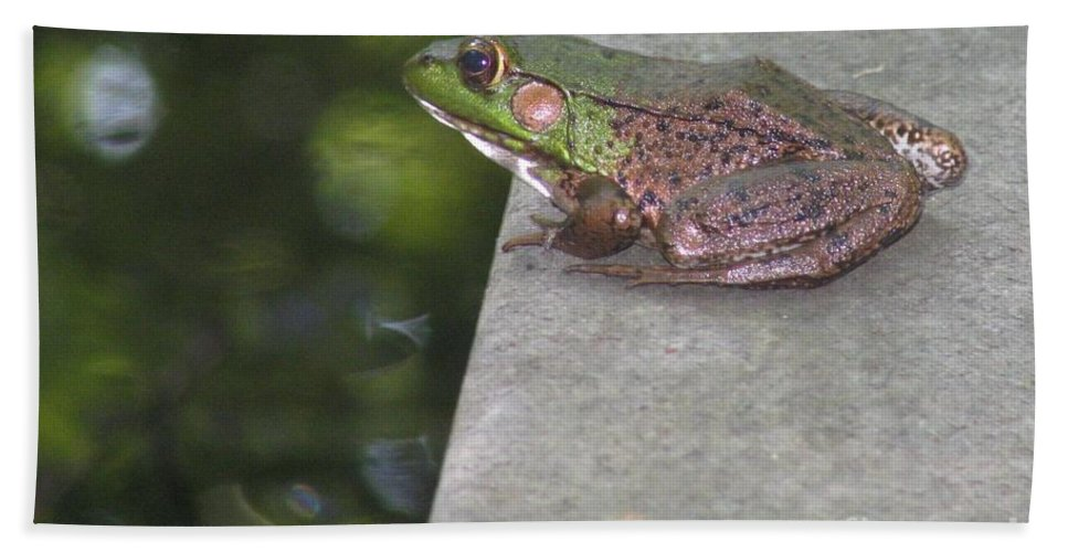 Frog Beach Towel featuring the photograph Prince by Art Dingo