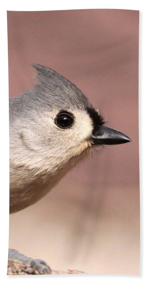 Tufted Titmouse Beach Towel featuring the photograph Profile by Travis Truelove