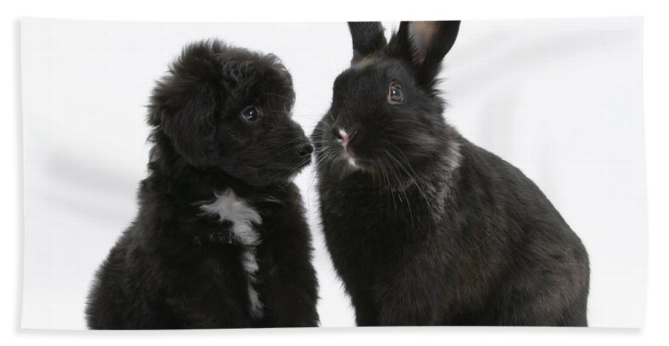 Animal Beach Towel featuring the photograph Puppy And Rabbit by Mark Taylor