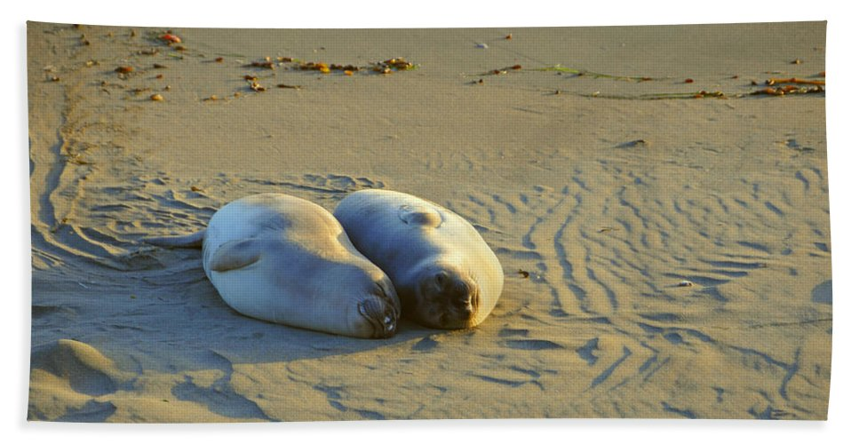 Elephant Seals Beach Towel featuring the photograph Puppy Love by Lynn Bauer