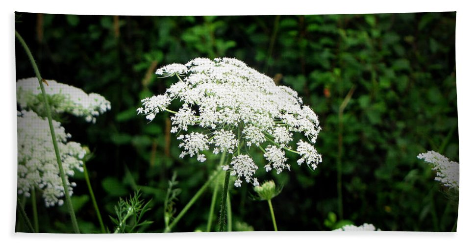 Queen Anne's Lace Beach Towel featuring the photograph Queen Anne's Lace by Ms Judi