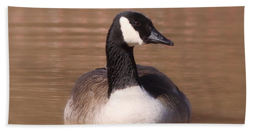 Goose Beach Towel featuring the photograph Quiet And Calm by Travis Truelove