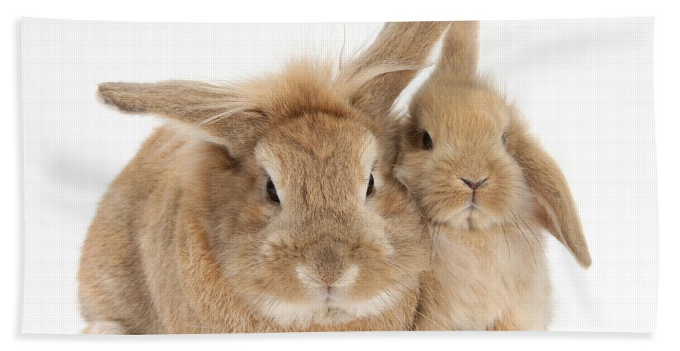 Animal Beach Towel featuring the photograph Rabbit And Baby Rabbit by Mark Taylor