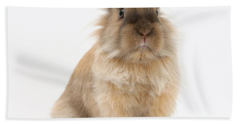 Animal Beach Towel featuring the photograph Rabbit by Mark Taylor