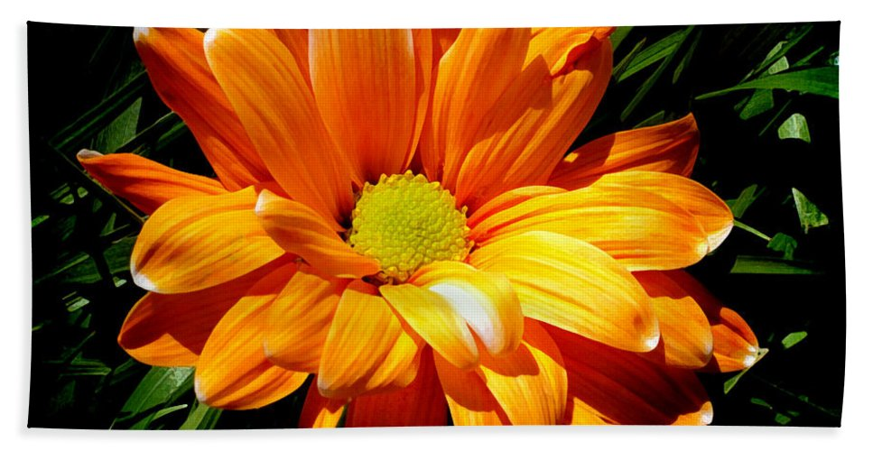 Daisy Beach Towel featuring the photograph Radiating by Angelina Vick