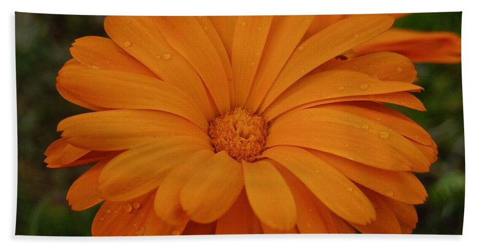 Flowers Beach Towel featuring the photograph Rain Drops by Diana Hatcher