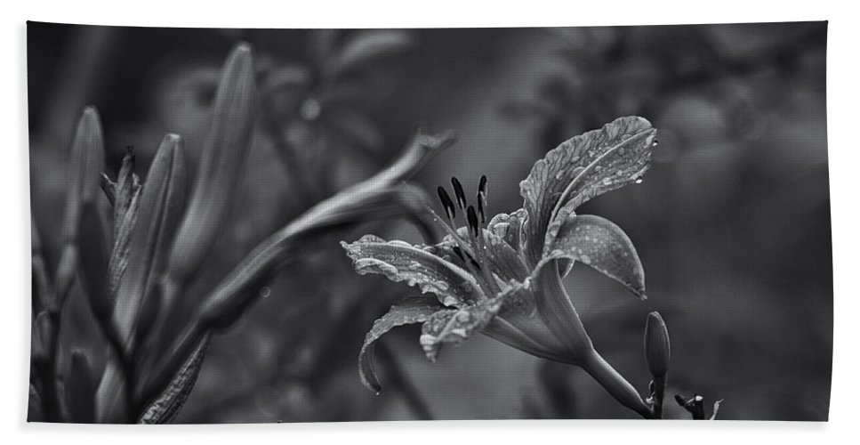 Daylily Beach Towel featuring the photograph Rainy Day Lily by Susan Capuano