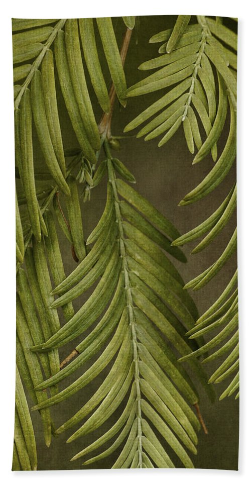 Trees Beach Towel featuring the photograph Random Nature by Dale Kincaid