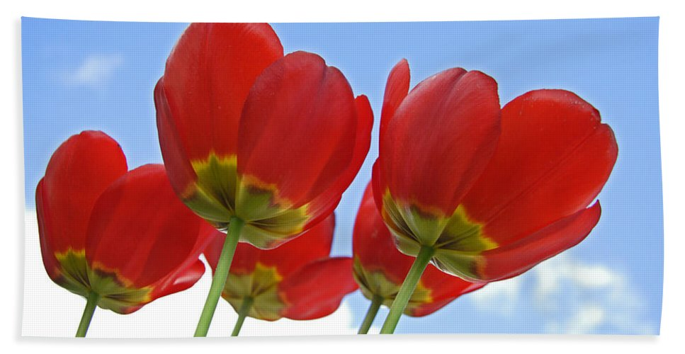 Tulips Beach Towel featuring the photograph Reaching by Jeff Galbraith
