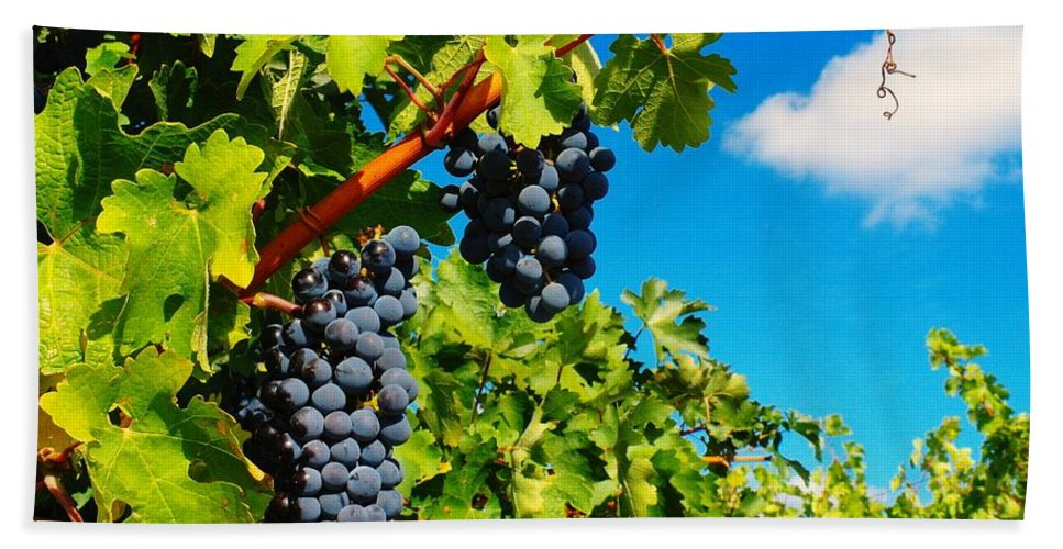 Wine Beach Towel featuring the photograph Ready For Harvest by Jeff Swan
