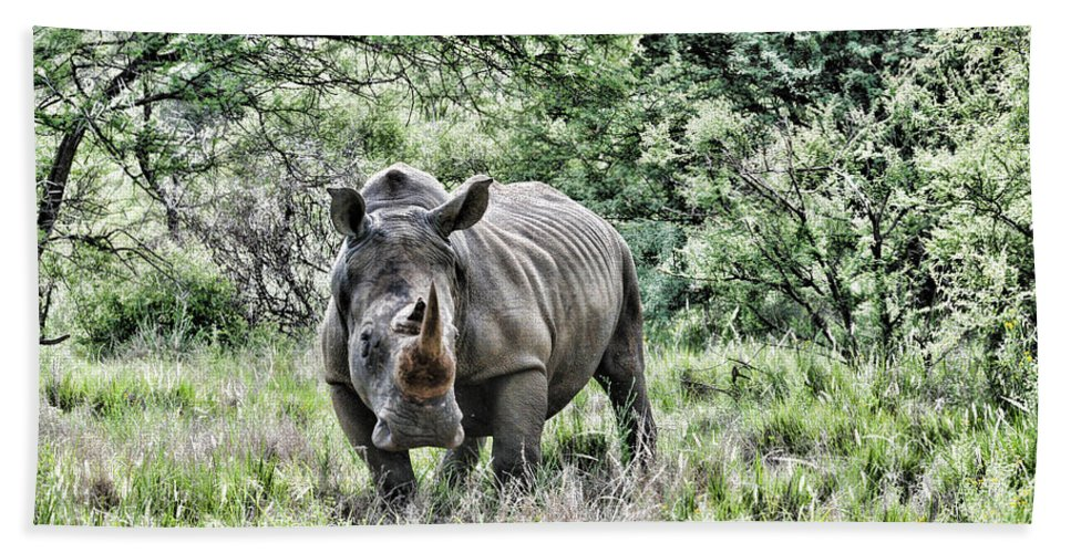 White Rhinoceros Beach Towel featuring the photograph Ready To Charge by Douglas Barnard