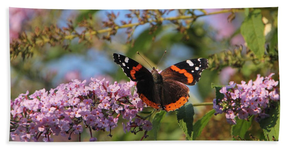 Red Admiral Butterfly Beach Towel featuring the photograph Red Admiral Butterfly by Ericamaxine Price