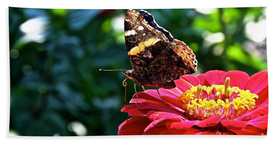 Outdoors Beach Towel featuring the photograph Red Admiral Probocis by Susan Herber
