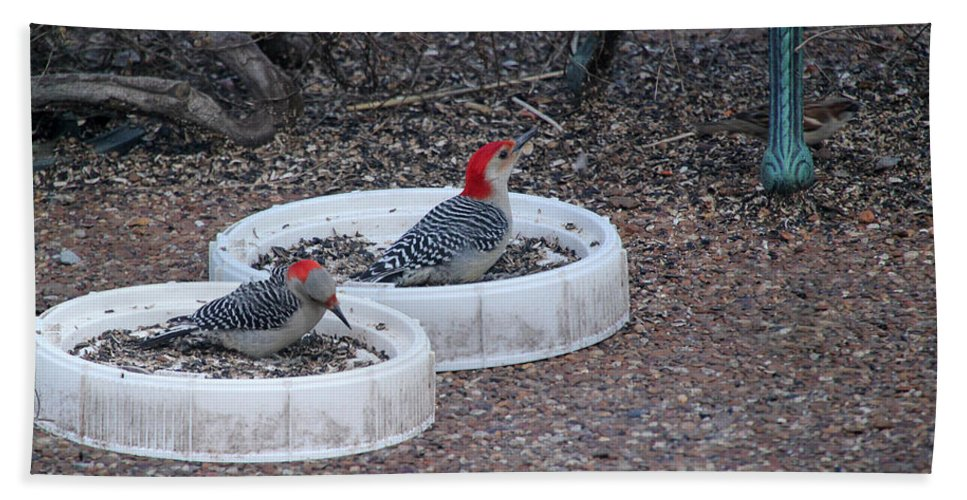 Tn Beach Towel featuring the photograph Red Bellied Woodpeckers Male And Female by Ericamaxine Price