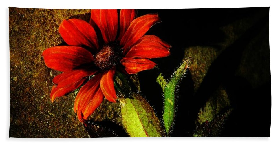 Coneflower Beach Towel featuring the photograph Red Coneflower by Chris Berry