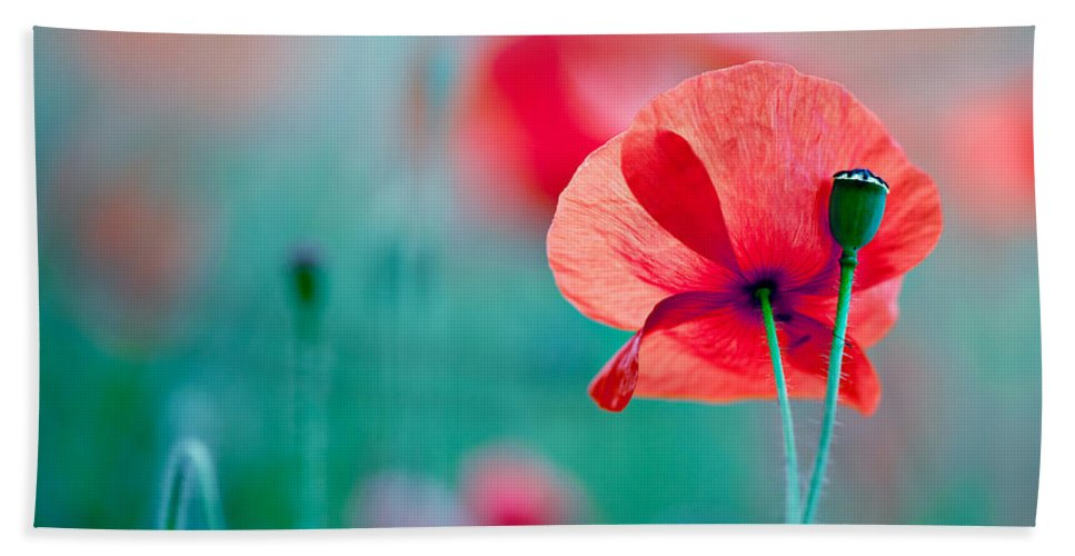 Poppy Beach Towel featuring the photograph Red Corn Poppy Flowers 04 by Nailia Schwarz